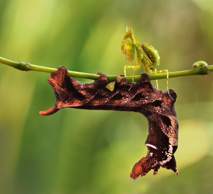 摄影师 捕捉 小蚂蚁 姿态 国外 千奇百怪/千奇百怪国外摄影师捕捉小蚂蚁的姿态