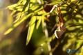 铃听自然! 贝尔塔铃铛之森系唯美图赏