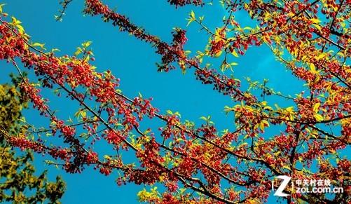 最美风景微信头像花朵