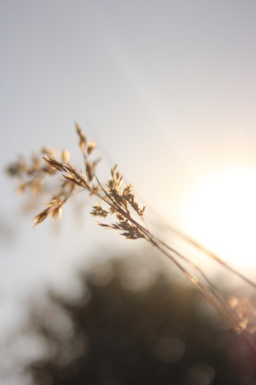 并且充分利用光线,就能拍出一些唯美清新的意境照片了.图片