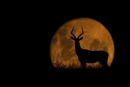 夜晚草原上的动物们 充满故事感的摄影-中关村在线