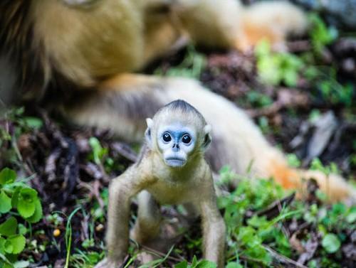 瞬间的照片,拍摄动物的时候不仅仅要拍的清晰画面优美,能拍的灵动可爱