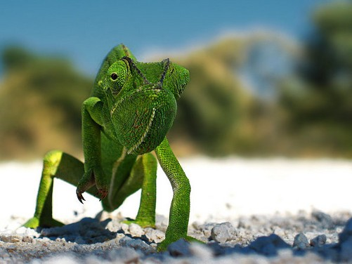 奇怪的小动物大合集 高清摄影图片欣赏-中关村在线