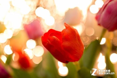 营造节日浪漫气氛 夜景灯光拍摄技巧分享