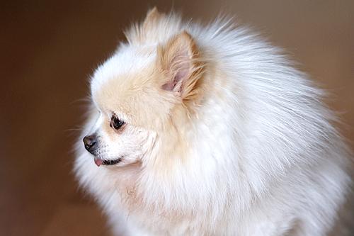 可爱小动物 索尼α100拍宠物的三种秘籍 (5/11)