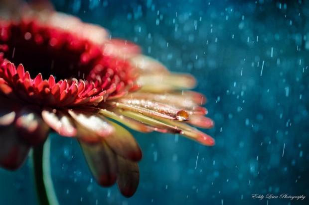 色彩斑斓的小世界 生活创意拍摄作品
