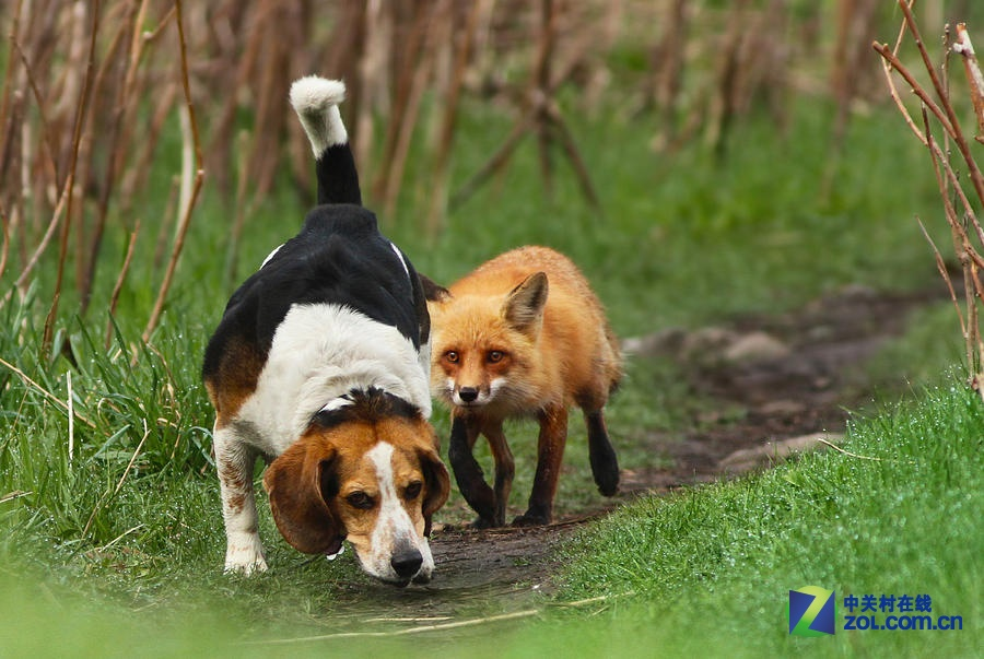 超萌小动物 mircea costina摄影作品赏