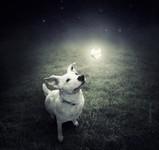 Sarolta Bán 《流浪狗的梦幻肖像》