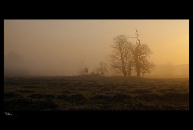夕阳下的大树 国外摄影师作品集欣赏1