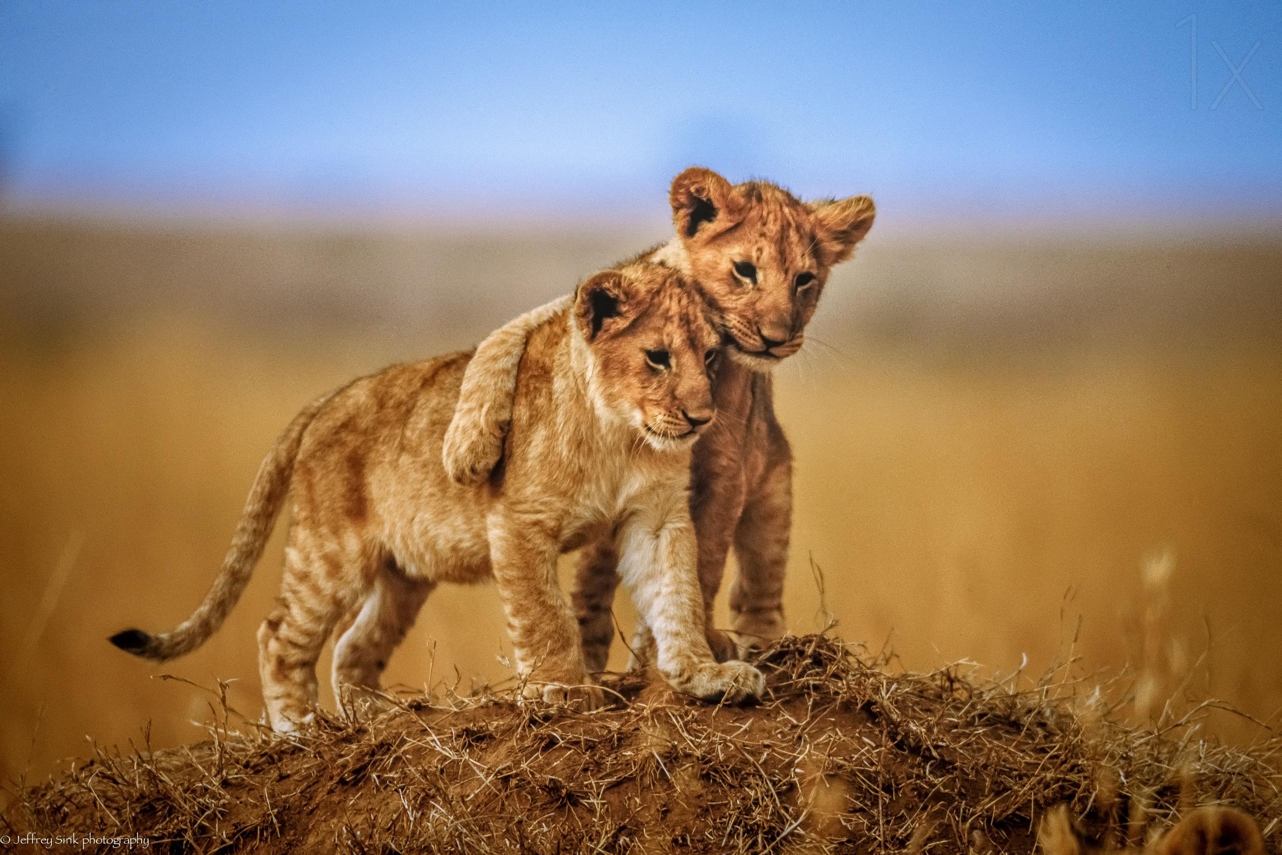 非洲草原上的精彩摄影作品