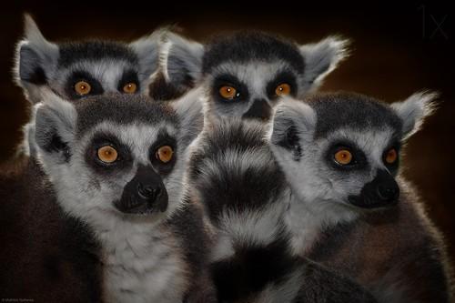 野生动物摄影作品集锦