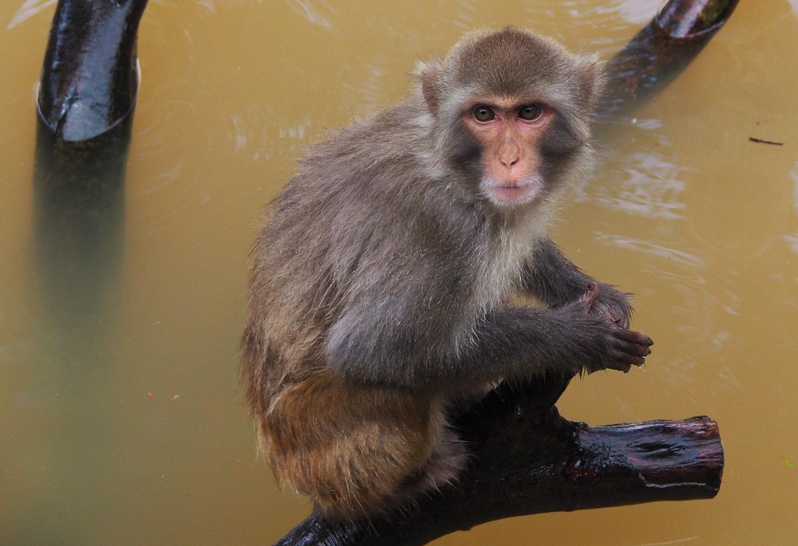 拍摄广州长隆动物园(1)