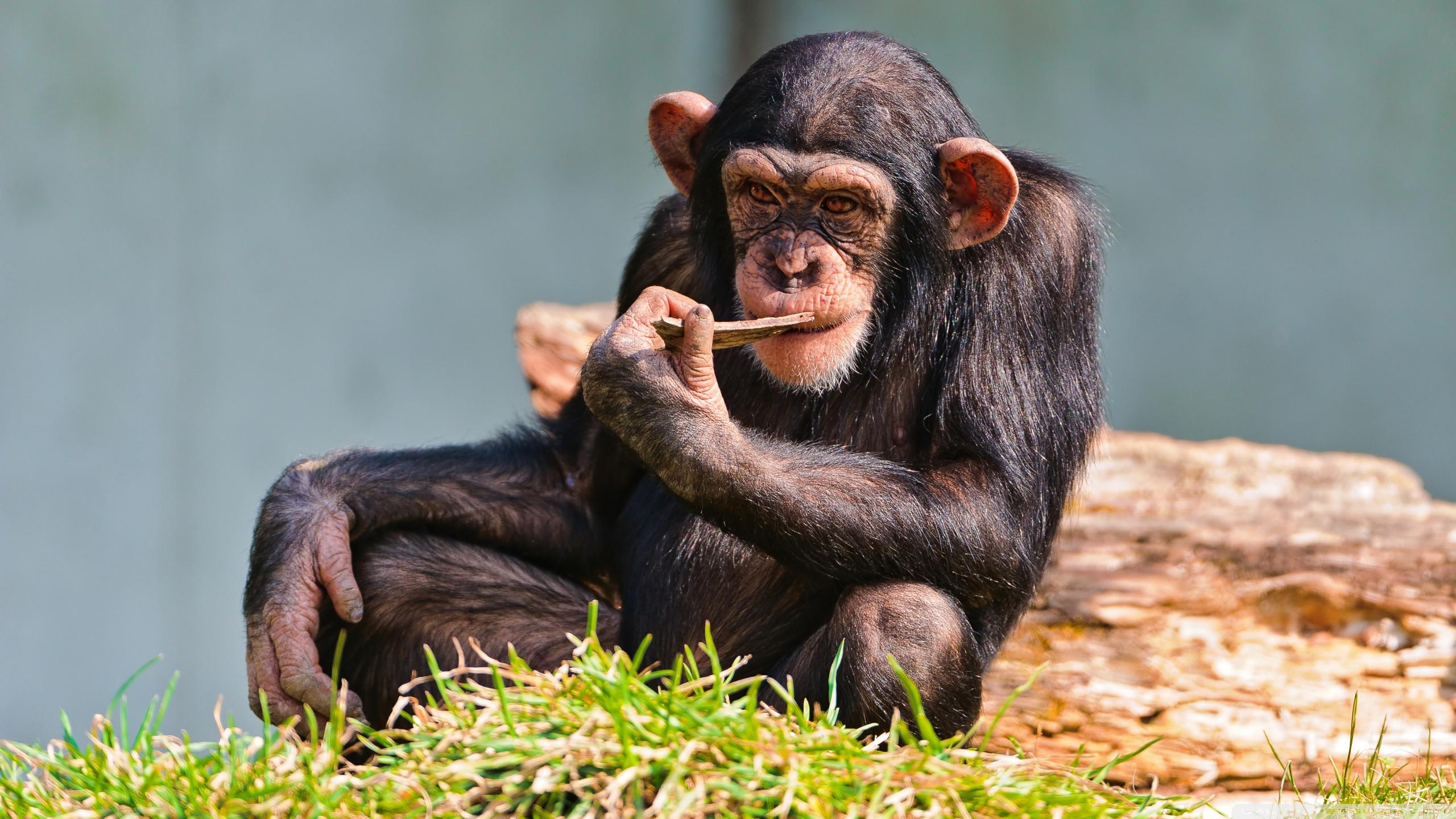 地球生命 精美野生动物高清大图赏