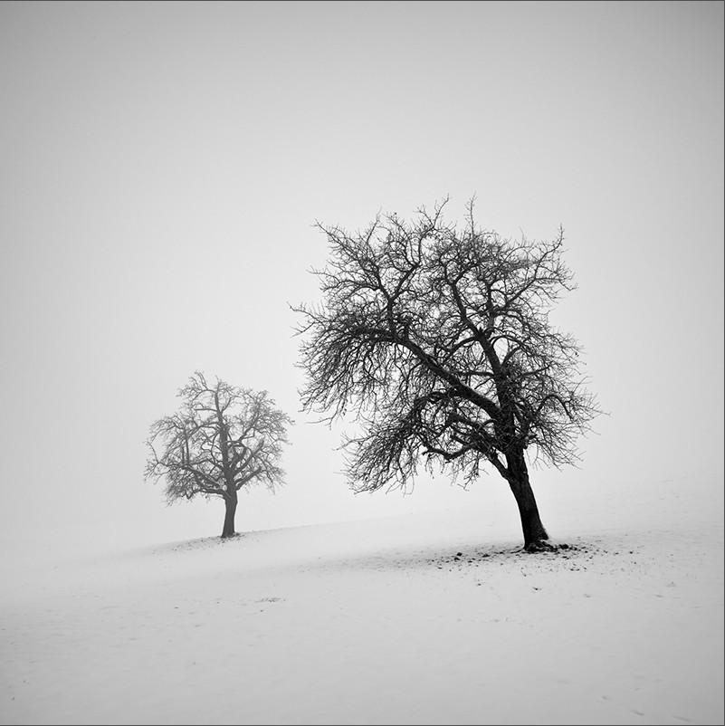 美丽荒寂的黑白风光 体育老师的迷雾森林