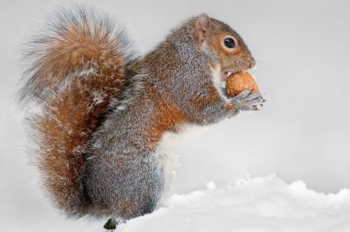 超可爱的野生松鼠照片-中关村在线