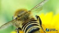 朝九晚五 三星手机记录蜜蜂辛勤劳作