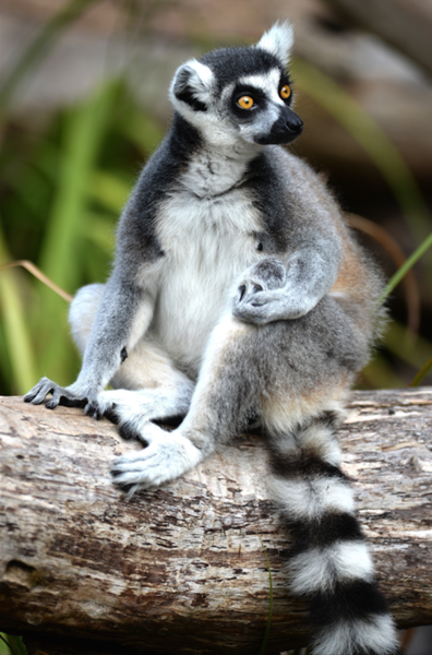 6d记录动植物王国马达加斯加