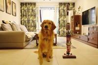 养宠家庭必备 莱克无线宠物吸尘器魔洁M95图赏