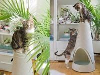 """""""主子""""的新玩具 它会让你家的猫爱不释手"""