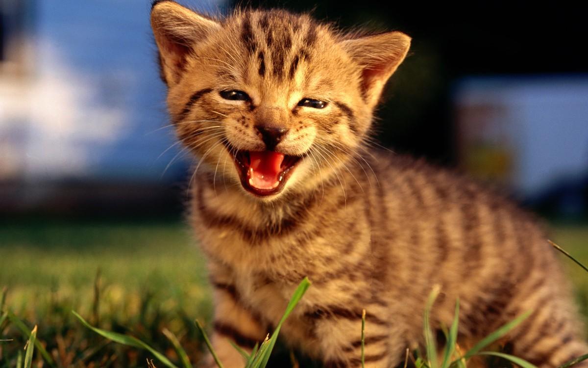 【高清图】 可爱小猫系列宽屏壁纸 第一辑图3