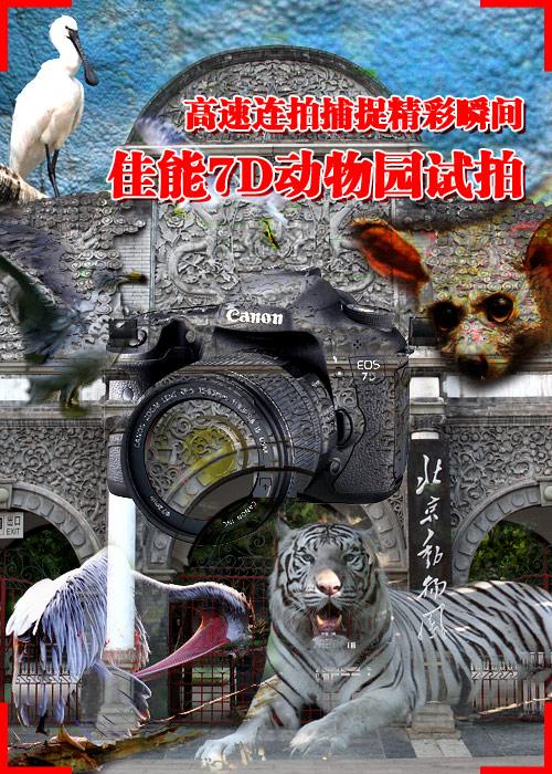 高速连拍捕捉精彩瞬间 佳能7D动物园试拍