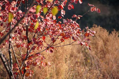 金秋香山之美 索尼微单nex-5c红叶拍摄赏