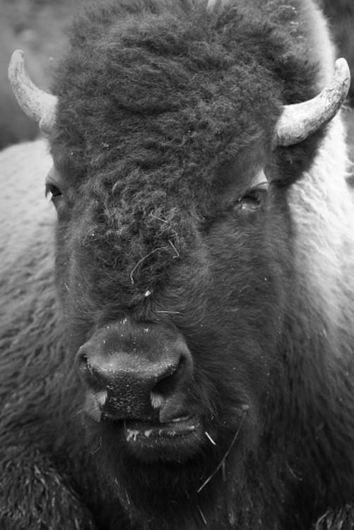 如何拍摄高质量动物照片-中关村在线