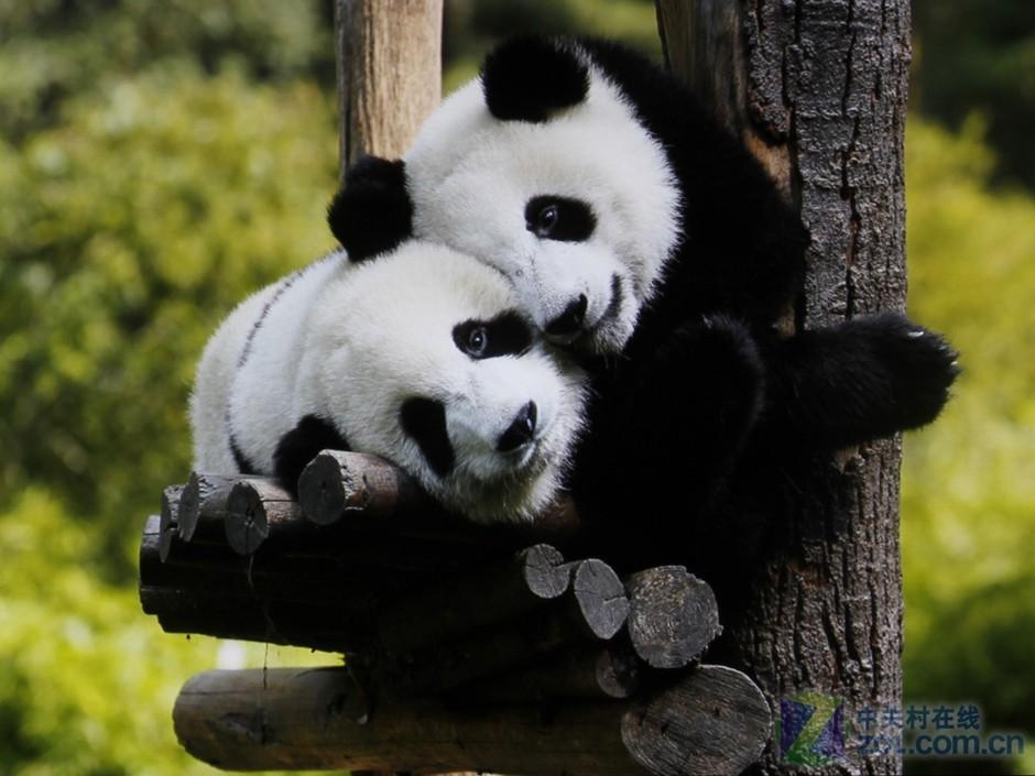 壁纸 大熊猫 动物 940_705