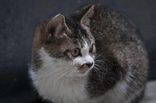 实拍可爱小猫照片