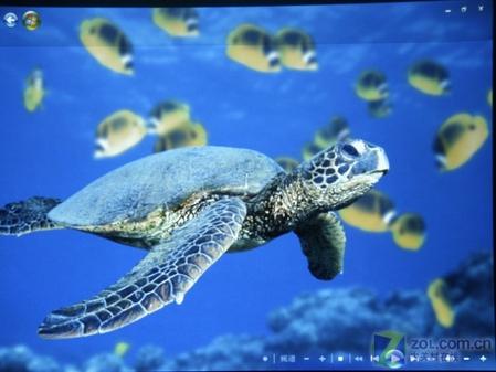 海底动物画面测试