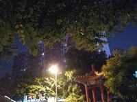 荣耀畅玩5A(CAM-AL00/全网通)样张秀7