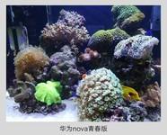 华为nova青春版(WAS-AL00/全网通)样张秀5